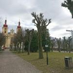 Lípy před kostelem prošly nutným ořezem